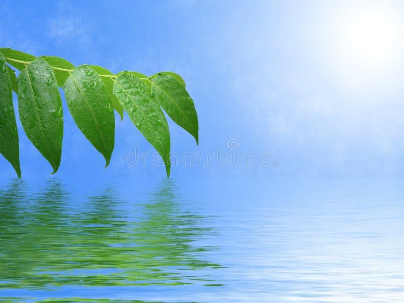 Lames de vert avec des gouttes de pluie image libre de droits