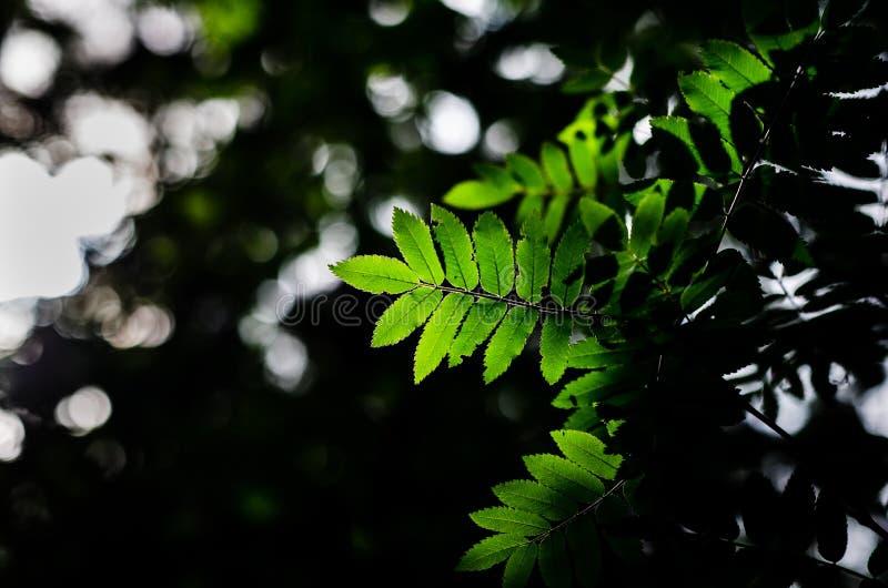 Lames de vert dans la forêt photographie stock libre de droits
