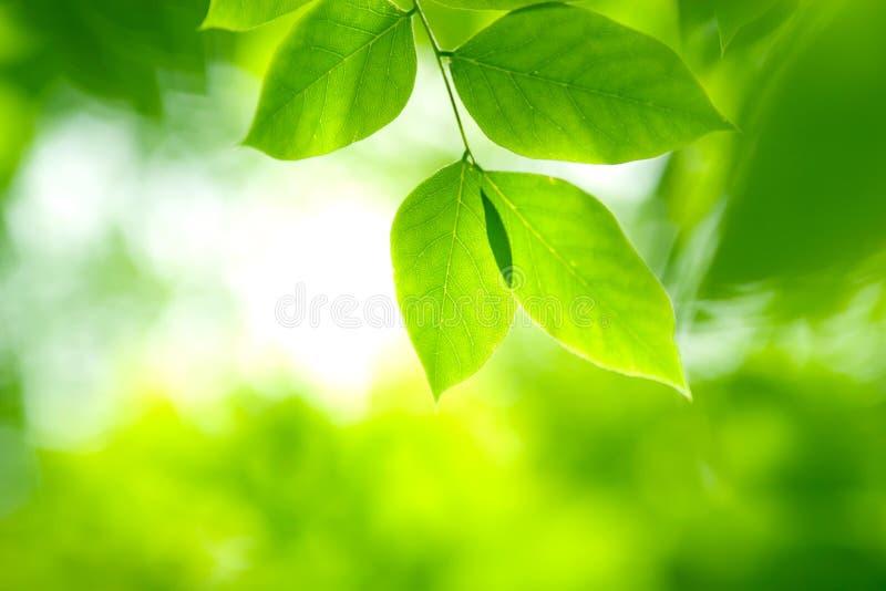Lames de vert dans la lumière molle photos libres de droits
