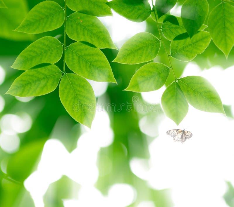 Lames de vert et guindineau de vol au soleil image stock