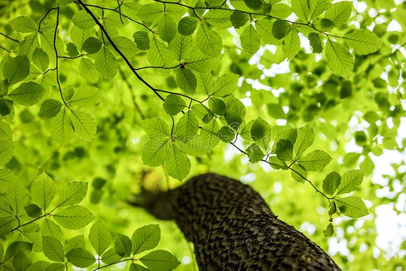 Lames de vert, fond de forêt images stock