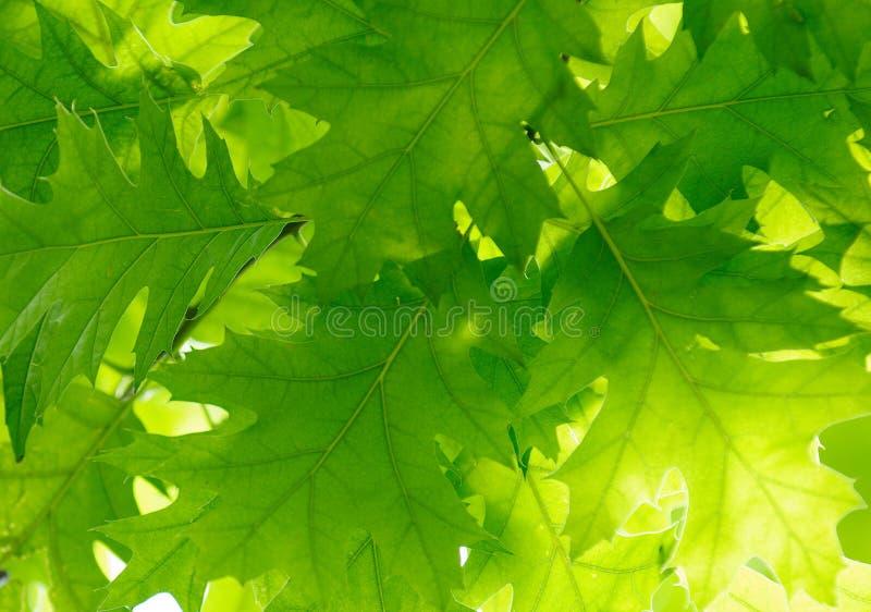 Lames de vert, orientation peu profonde photographie stock