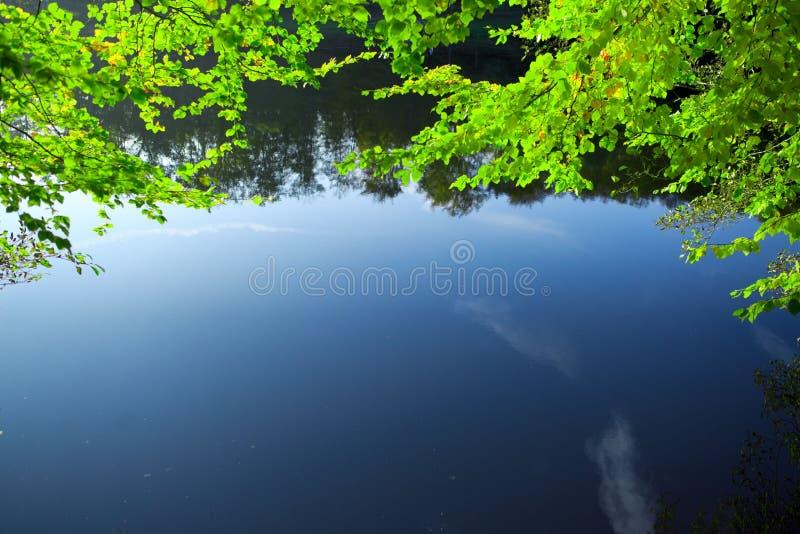 Lames de vert se reflétant dans l'eau images stock