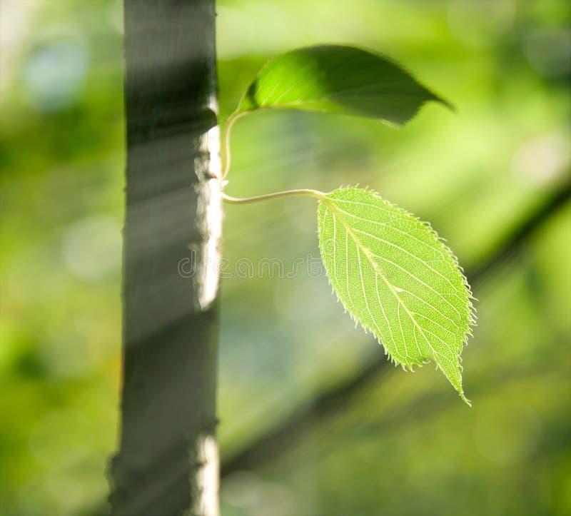 Lames de vert sur un arbre dans les rayons de soleil photographie stock libre de droits