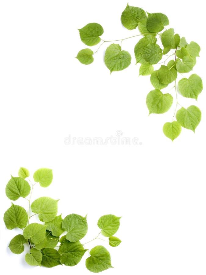 Lames de vert, trame décorative photo libre de droits
