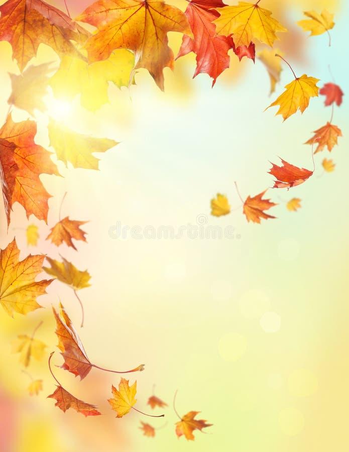 Lames en baisse d'automne image stock