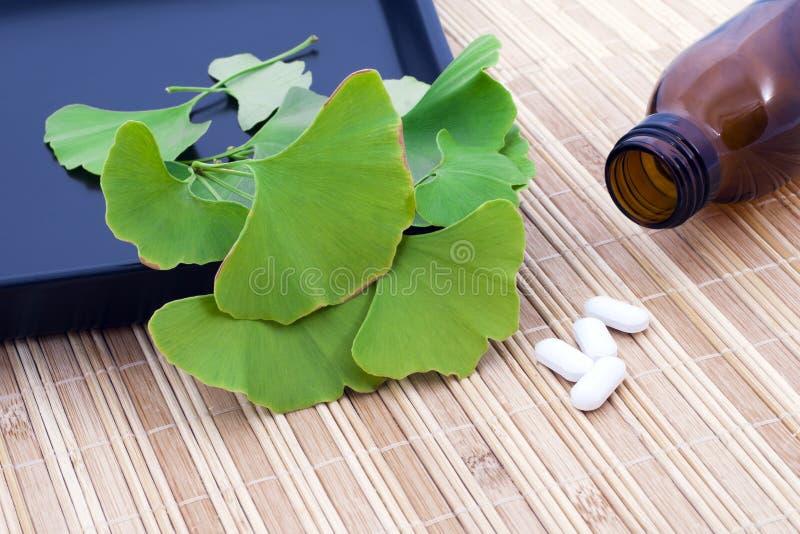 Lames et pharmaceutiques d'arbre de biloba de Ginkgo. photographie stock