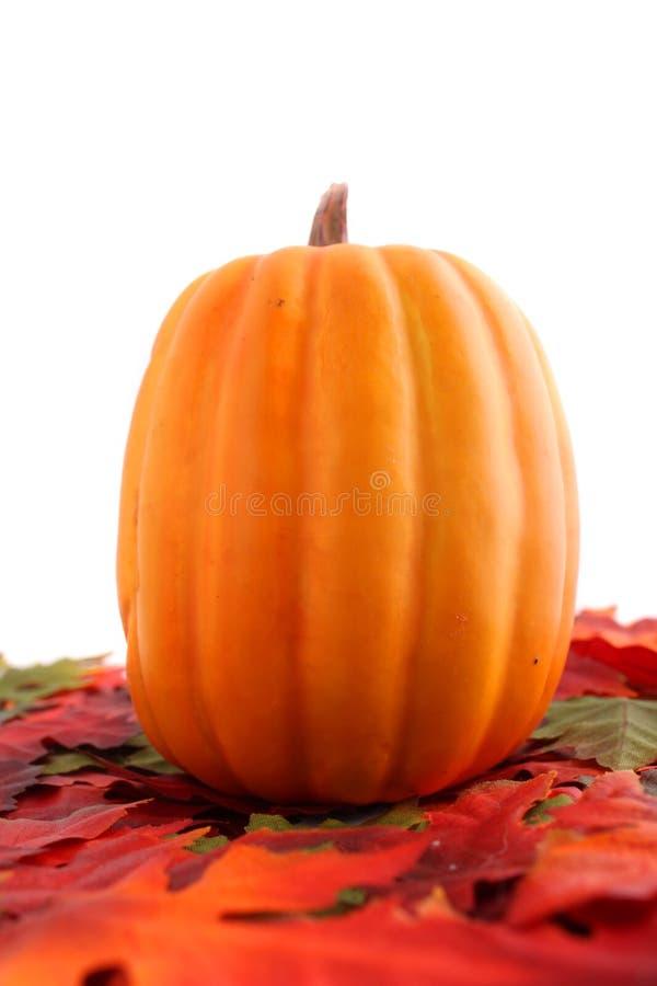 Lames et potiron d'automne image stock