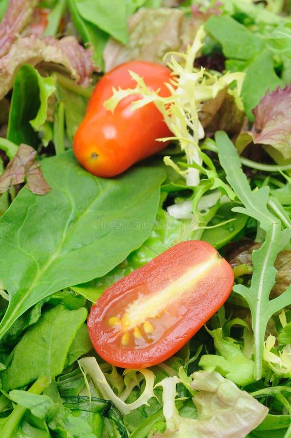 Lames et tomates de salade image libre de droits