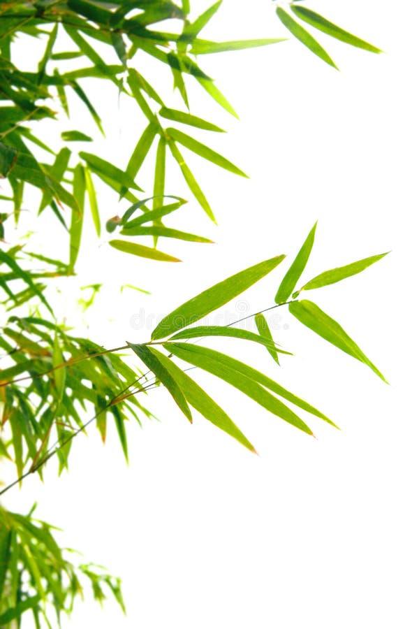 Lames japonaises de bambou sur les brindilles minces photographie stock libre de droits