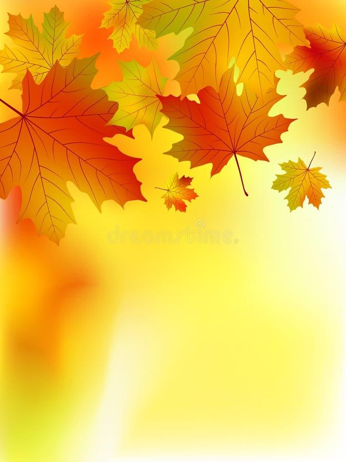 Lames jaunes d'érable d'automne. illustration libre de droits