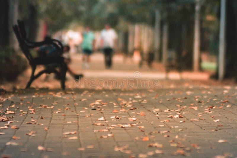 Lames sur la rue photo libre de droits