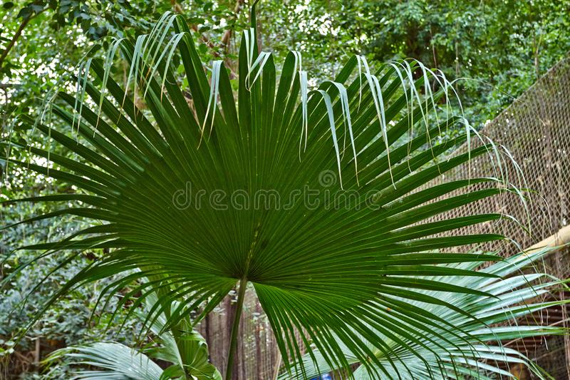Lames tropicales de vert photo stock