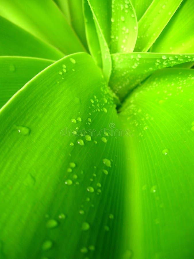 Lames tropicales vertes photos libres de droits