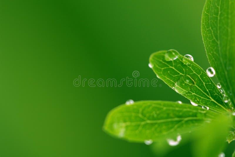 Lames vertes avec des baisses images stock