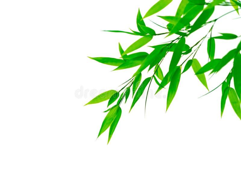 Lames vertes de bambou sur le fond blanc photographie stock