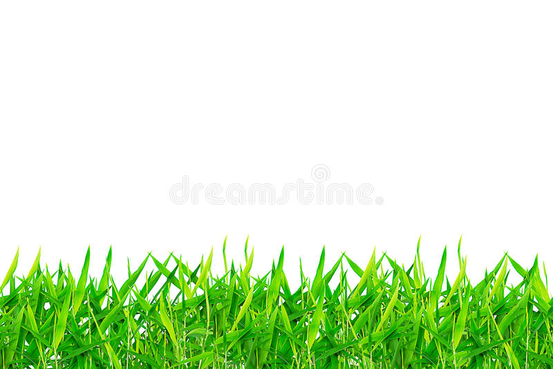 Lames vertes de bambou sur le fond blanc photos stock