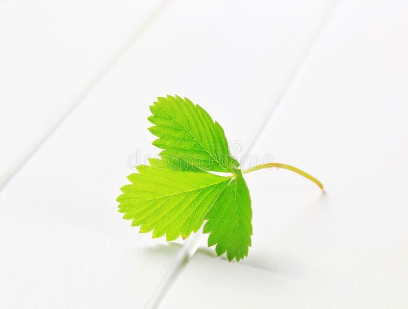 Lames vertes de fraise photo stock