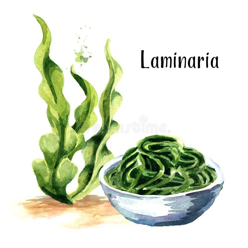 Laminaria, Kelp gałęzatka Superfood Akwareli ręka rysująca ilustracja odizolowywająca na białym tle ilustracja wektor