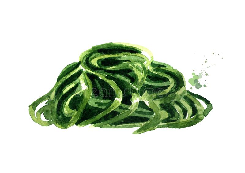 Laminaria, Kelp, gałęzatka Superfood Akwareli ręka rysująca ilustracja, odizolowywająca na białym tle ilustracji