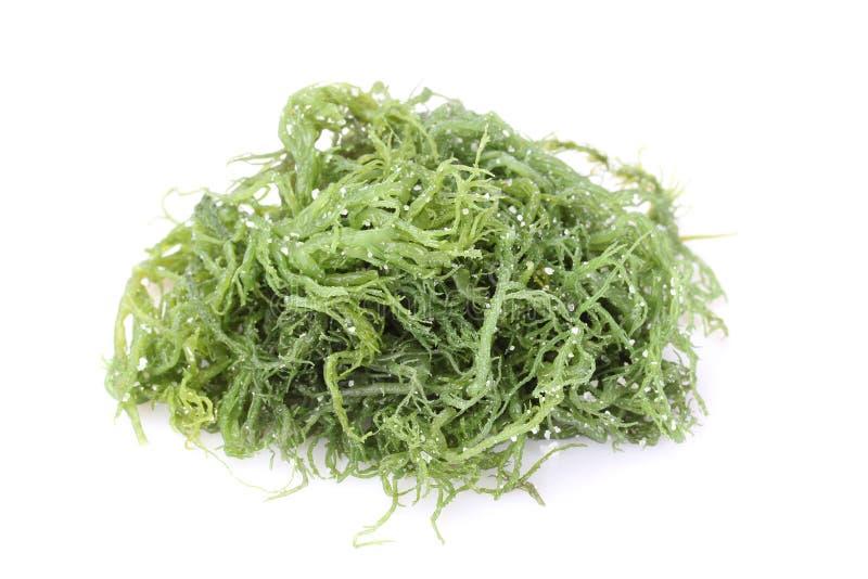 Laminaria (Kelp) Zeewier stock fotografie