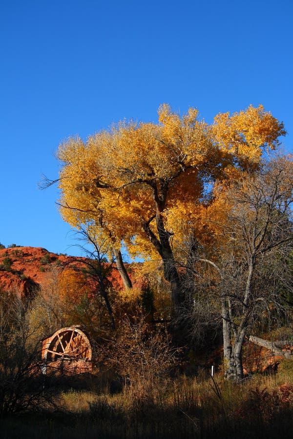 Laminatoio giallo di acqua e dell'albero immagine stock
