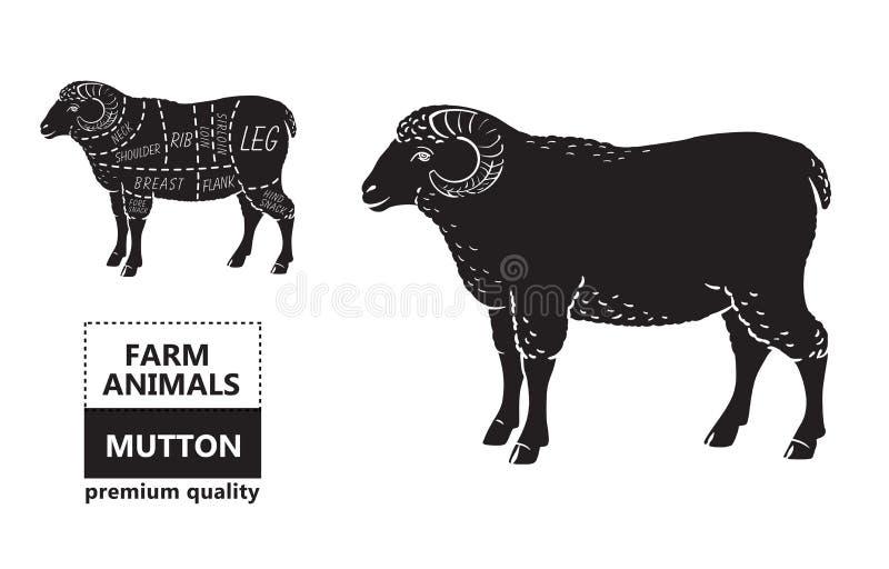 Lamm- eller fårköttsnittdiagram Slaktare Shop vektor illustrationer
