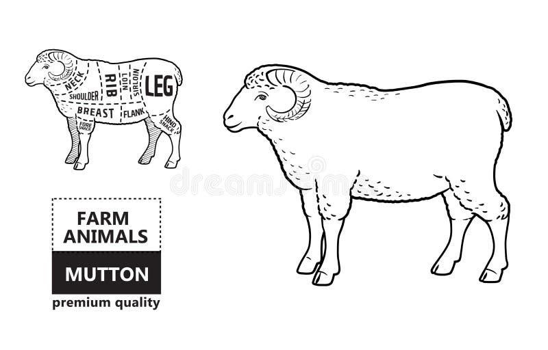 Lamm- eller fårköttsnittdiagram Slaktare Shop royaltyfri illustrationer
