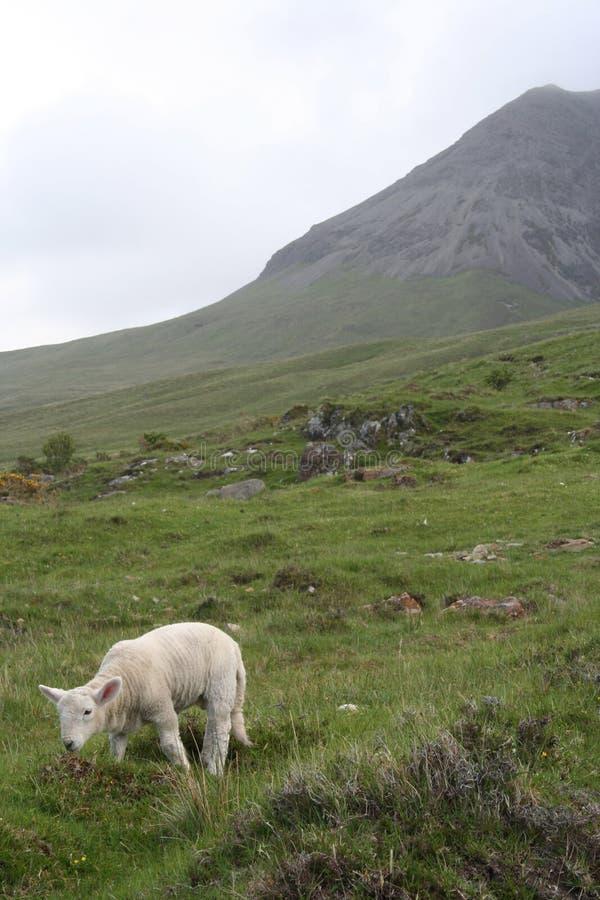 Lamm-Insel von Skye stockfotos