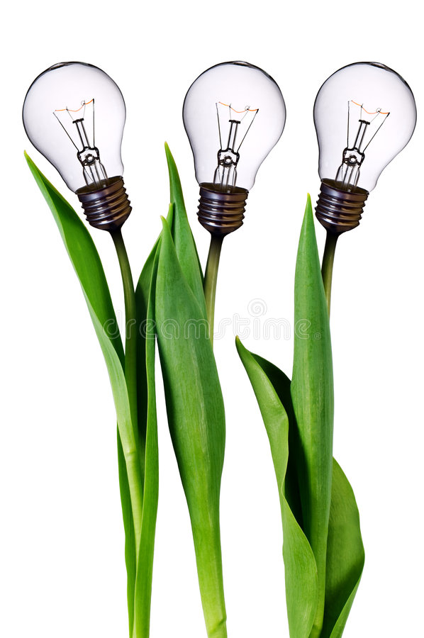 Lamp bulb tulips royalty free stock image