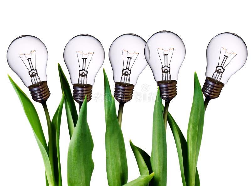Lamp bulb tulips royalty free stock photos