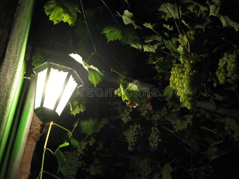Lamp and Bunch of Grapes stock images