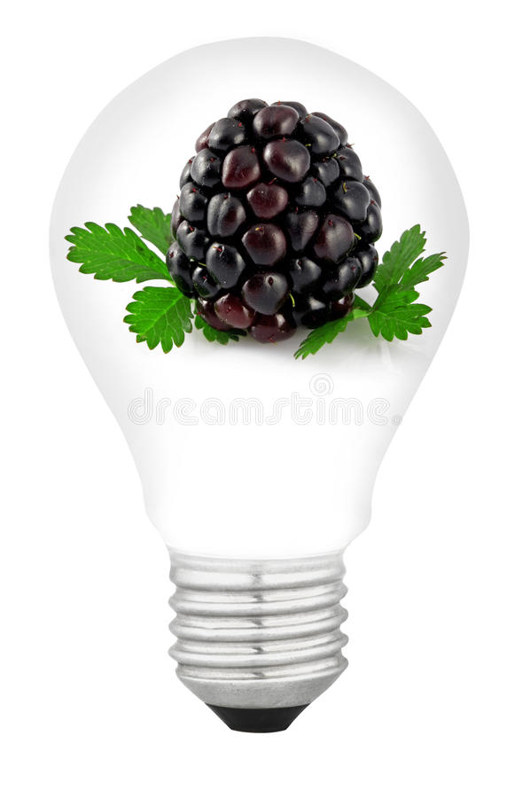 Download Lamp with fruit stock photo. Image of cherry, purchase - 23968688