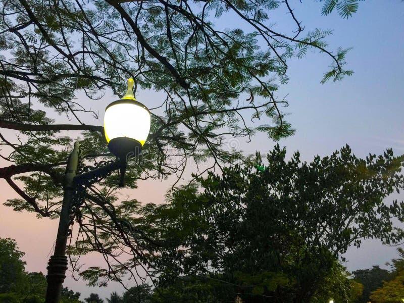 Lamp light tree royalty free stock photos