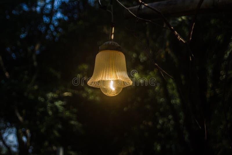 The fireflies stock photo