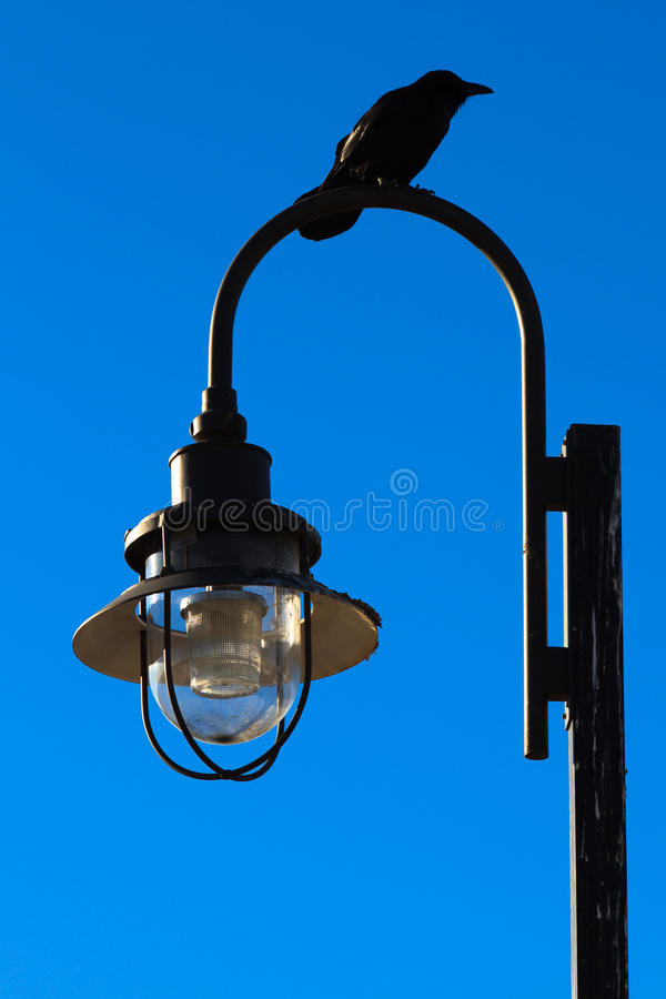 Download Lamp post stock image. Image of wildlife, post, blue - 22662295