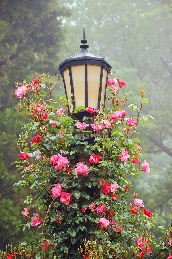 Free Lamp Post And Roses Stock Photography - 20019232