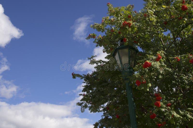 Lamp Post Fall Tree Blue Cloudy Sky stock photos