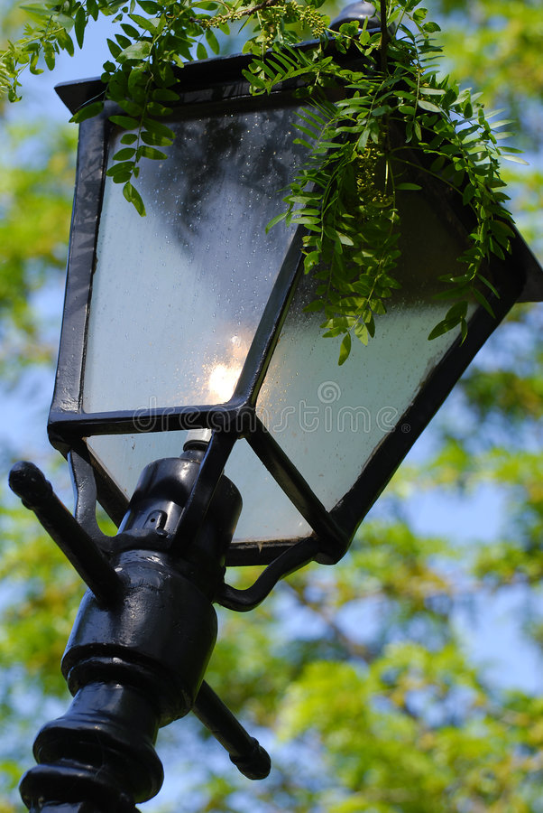 Lamp Post in Garden. A lamp post in a garden or park, with greenery hanging over the top, and leaves in the background royalty free stock images
