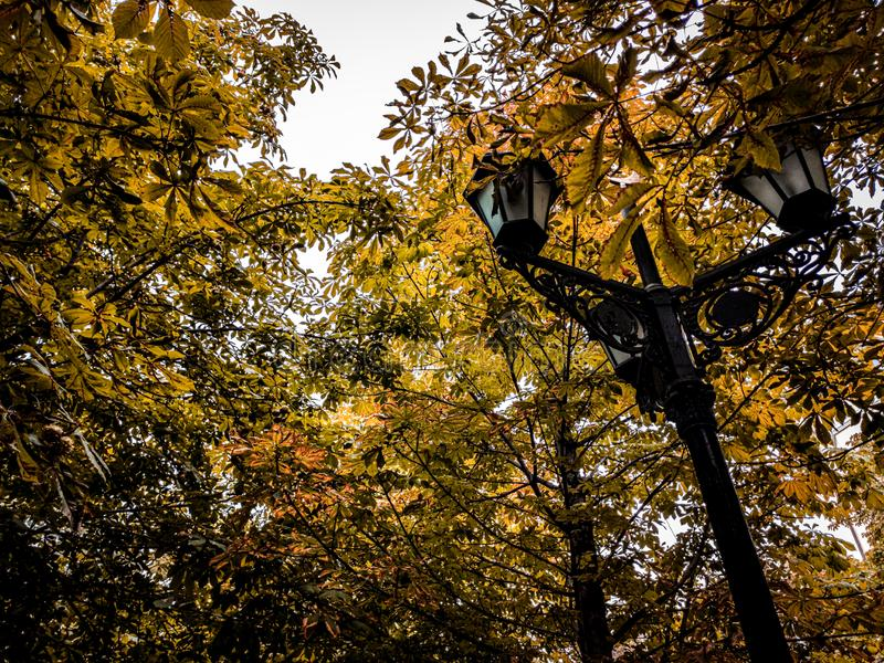 A lamp between trees at autumn stock images