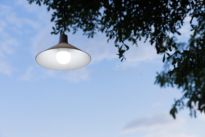 Lampa på träd royaltyfri bild