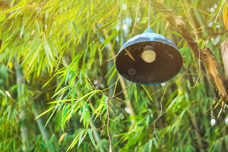 Lampa w bambusowym forestThailand zdjęcia stock