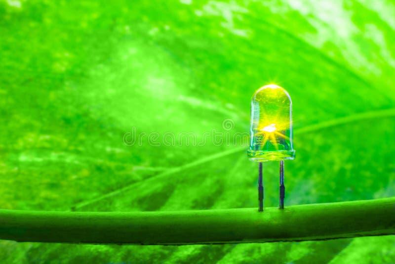 Lampada del LED con la foglia verde, lig della lampada di concetto del mondo di risparmi di energia di ECO immagini stock libere da diritti