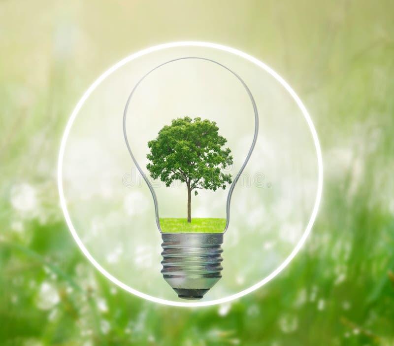 Lampadina con l'albero che cresce dentro immagine stock