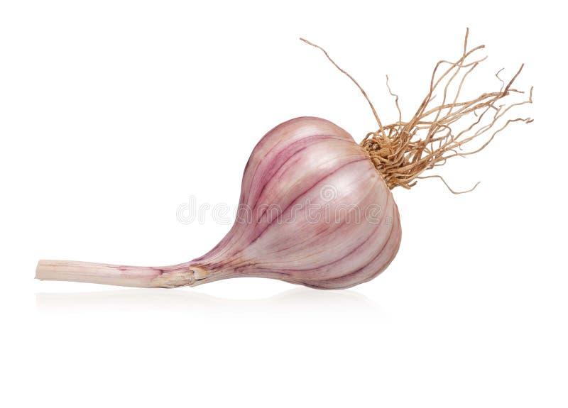 Lampadina dell'aglio fotografie stock libere da diritti