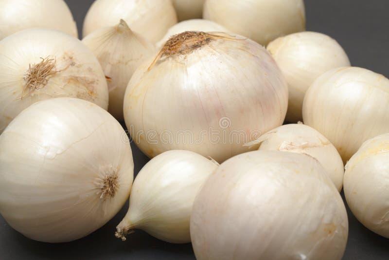Lampadina della cipolla bianca immagini stock libere da diritti