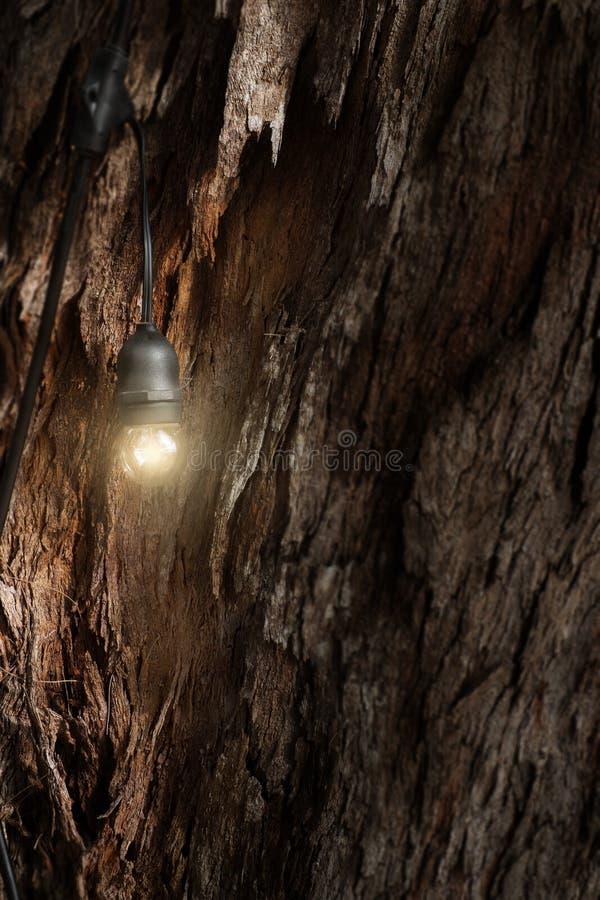 Lampadina della luce intensa sul tronco di albero fotografia stock libera da diritti