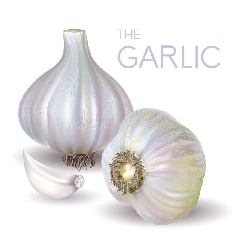 Lampadina e fetta dell'aglio royalty illustrazione gratis