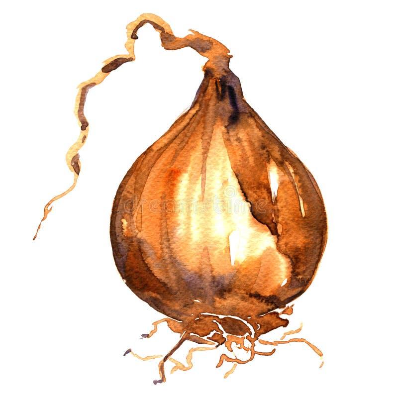 Lampadina gialla matura della cipolla, verdura, isolata, illustrazione dell'acquerello su bianco royalty illustrazione gratis