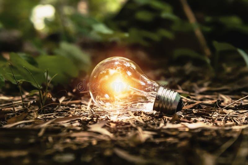 lampadina su terra con sole nell'energia pulita di concetto della foresta immagine stock